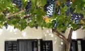 Kuća Živi Bunari
