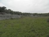 Krk,maslinik površine 8072m2